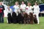 Otroligt men sant vi vann för andra dagen i rad BIS 1 avelsgrupp i Norrköping 2009