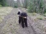 Aida när hon tränat viltspår