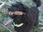 Aida var jättelycklig när hon fick träna viltspår nov.2008