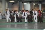 Bästa uppfödargrupp bland storpudlarna på World Dog Show 2008