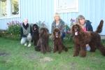 Curlys o Domingos valpar. fr.v. Daisy, Curly, Freja och Sally