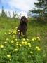 Effie 2 år