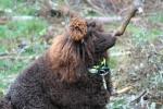 Här har Rufus kommit fram och funderar vad han funnit nov.2008
