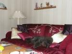 Irma ha fått en ny soffa