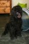 Lilla Elsa som fått nytt namn och kallas för Lilla Trassel här 11 veckor