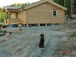 Lora håller utkik när matte och husse är upptagna med husbygge
