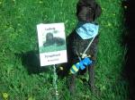 Ludwig har tagit examen som Terapihund 30 maj 2010