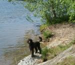 Miro funderar på att ta ett dopp vid Flatenbadet