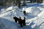 Nelson Speja och Zottie i valphagens labyrinter