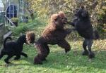 Speja, Nelson och Lukas har kul i trädgården