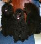 Syskonen Teddy, Java och Jack