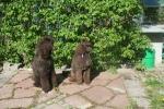 Två syskon Calvi och Irma 2075-2007