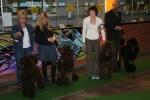 Uppfödargrupp HP o BIR i Gävle 2009 med Speja, Rufus, Irma och Molly