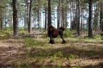 Uställningsfrisyr hindrar inte Wilda från att ha kul i skogen juli 2008