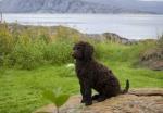 Vilken vacker tavla med Effie i förgrunden