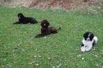 Wilda med sin hundfamilj Zamita och Xtra tränar platsliggning