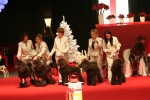 Avelsgruppen Zottie, Rufus, Mozart, Speja; Honey BIG 3 med jättefin kritik