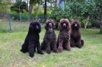 Fyra generationer Aida Zottie Curly och Sheela