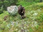 Nelson tränar viltspår, han har fixat anlagsprovet nu.