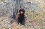 Wilda jobbar i skogen